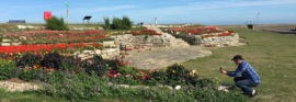 Sandown Community garden, Deal, Kenten