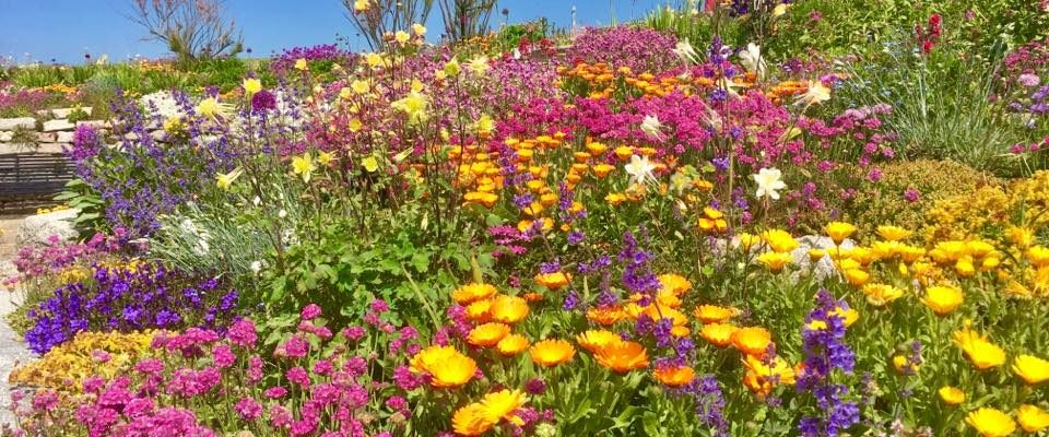 Sandown Castle Community Garden, Deal, Kent