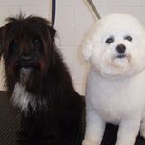Scruffs and Cruffts Canine Beauticians